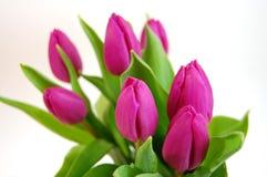 Ramo de tulipanes foto de archivo libre de regalías