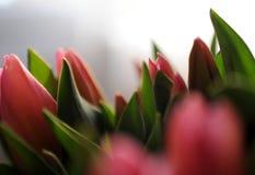 Ramo de tulipanes Fotografía de archivo libre de regalías