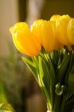 Ramo de tulipanes amarillos Imagen de archivo
