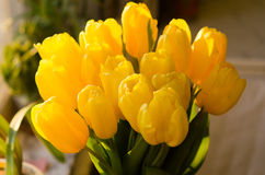 Ramo de tulipanes amarillos Imagen de archivo libre de regalías