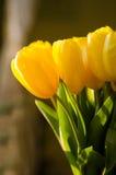 Ramo de tulipanes amarillos Foto de archivo