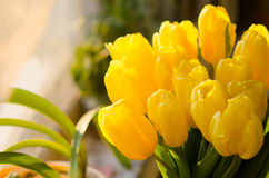 Ramo de tulipanes amarillos Foto de archivo libre de regalías