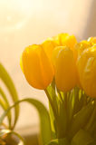 Ramo de tulipanes amarillos Imagenes de archivo