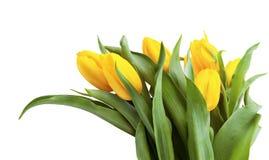 Ramo de tulipanes amarillos aislados en el fondo blanco. Fotos de archivo libres de regalías