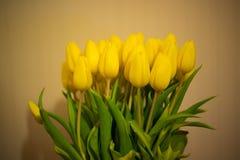 Ramo de tulipanes amarillos coloridos de la primavera Imagen de archivo libre de regalías