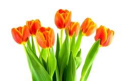 Ramo de tulipanes amarillos y anaranjados aislados Imagenes de archivo