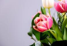 Ramo de tulipanes blancos y rosados delante del backgroun brillante Fotos de archivo libres de regalías