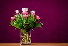 Ramo de tulipanes blancos y rosados delante del backgroun vino-rojo Fotos de archivo libres de regalías
