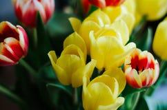 Ramo de tulipanes coloridos naturales Imagenes de archivo