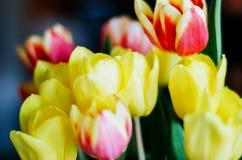 Ramo de tulipanes coloridos naturales Imagen de archivo libre de regalías