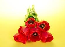 Ramo de tulipanes con una cuerda imágenes de archivo libres de regalías