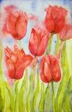 Ramo de tulipanes en un campo Imagen de archivo libre de regalías