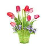 Ramo de tulipanes en una cesta Imágenes de archivo libres de regalías