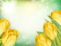 Ramo de tulipanes EPS 10 Fotos de archivo