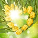 Ramo de tulipanes EPS 10 Foto de archivo libre de regalías