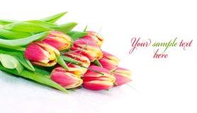 Ramo de tulipanes frescos Fotografía de archivo libre de regalías