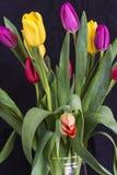 Ramo de tulipanes frescos Fotografía de archivo