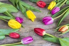 Ramo de tulipanes frescos con el waterdrop Imagenes de archivo