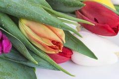 Ramo de tulipanes frescos con los waterdrops Fotos de archivo