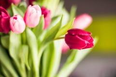 Ramo de tulipanes hermosos, fondo floral imagen de archivo