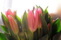 Ramo de tulipanes i Fotos de archivo libres de regalías