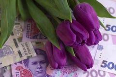Ramo de tulipanes púrpuras y de hryvnia ucraniano de la divisa nacional, dinero - un regalo para el día de fiesta, concepto imagenes de archivo