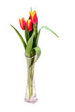 Ramo de tulipanes rojos en el primer de cristal del florero en el fondo blanco Imagen de archivo