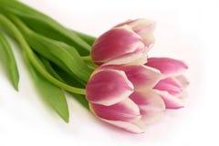 Ramo de tulipanes rosados Imagenes de archivo