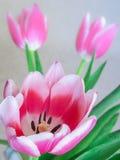 Ramo de tulipanes rosados Fotos de archivo