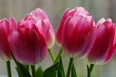 Ramo de tulipanes rosados fotografía de archivo