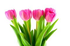 Ramo de tulipanes rosados aislados Foto de archivo