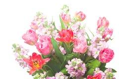 Ramo de tulipanes rosados con incana del Matthiola Imágenes de archivo libres de regalías