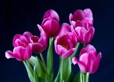 Ramo de tulipanes rosados en un fondo oscuro Flores rosadas hermosas foto de archivo