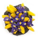 Ramo de tulipanes y de iris en la caja negra aislada en el fondo blanco fotos de archivo libres de regalías