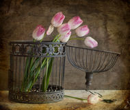 Ramo de tulipanes y de jaula Fotografía de archivo