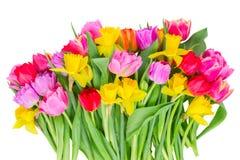 Ramo de tulipanes y de narcisos imagen de archivo libre de regalías
