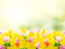 Ramo de tulipanes y de narcisos fotografía de archivo libre de regalías