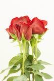 Ramo de varias rosas rojas verticales Foto de archivo