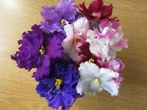Ramo de violetas Fotos de archivo