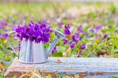 Ramo de violetas de las flores del bosque en una regadera de la lata en un tablero retro de madera azul en un primer del prado de imagen de archivo