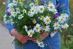 Ramo de wildflowers con las margaritas en las manos Foto de archivo