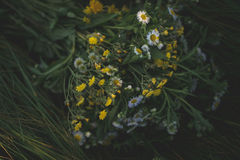 Ramo de wildflowers hermosos en la hierba fotografía de archivo libre de regalías