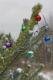 Ramo decorato del pino Fotografia Stock Libera da Diritti