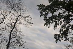 Ramo degli alberi con le foglie e senza sui precedenti con il cielo grigio-blu Opposti di contrasto di estate fotografie stock