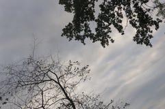 Ramo degli alberi con le foglie e senza sui precedenti con il cielo grigio-blu Opposti di contrasto di estate fotografia stock libera da diritti