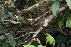 Ramo degli alberi coperti di muschio e di lichene, simbiosi della natura fotografia stock libera da diritti