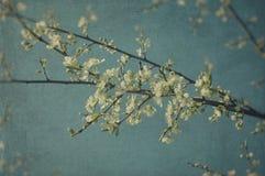 Ramo dei fiori bianchi Fotografia Stock