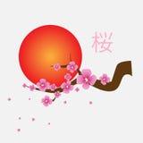 Ramo dei fiori di sakura Fotografia Stock Libera da Diritti