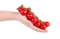 Ramo dei pomodori ciliegia della tenuta della mano Fotografia Stock