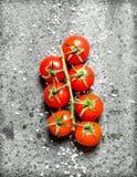Ramo dei pomodori maturi rossi Fotografie Stock